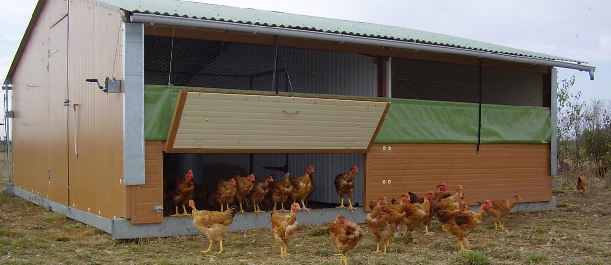 poulets de chair en bâtiment déplaçable