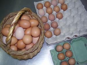 Les jeunes poules pondent !  N'hésitez pas à venir faire vos provisions d'oeufs extra frais.